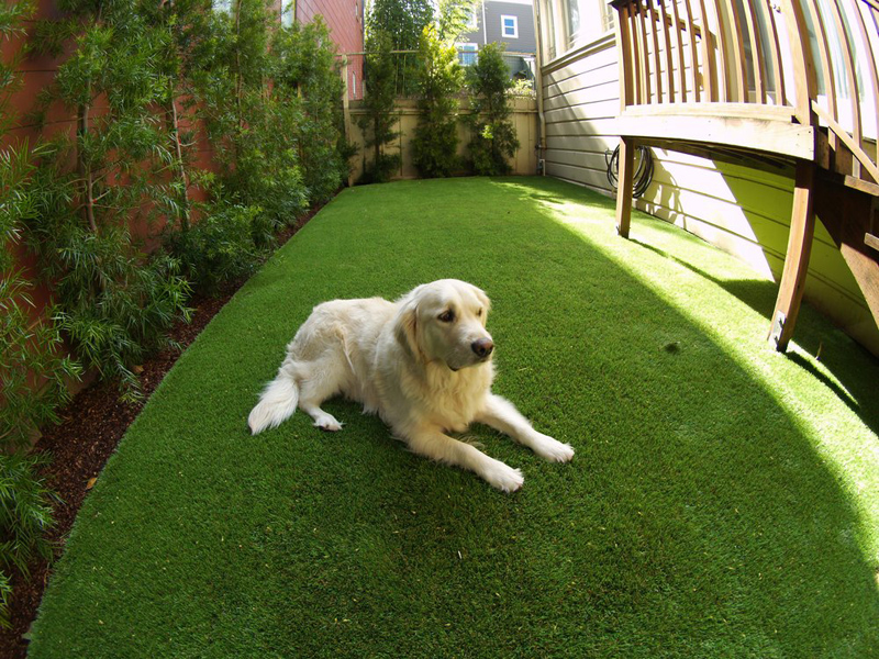 Synthetic-Grass-designrulz-9